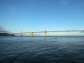 Bay Bridge 06 NTSC Stock Footage