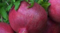 Stock Video Footage of pomegranates