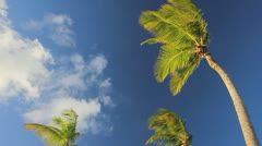 Palm tree on the blue sky timelapse Stock Footage