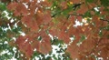 Beautiful Colorful Autumn Foliage Season Red Leaf Forest Trees Green Leaves Footage