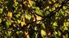 Fall leaves leaf autumn foliage Stock Footage
