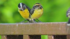 Small birds Stock Footage