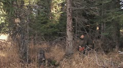 Man in Forest felling Tree with Chainsaw 2 LOUD Stock Footage