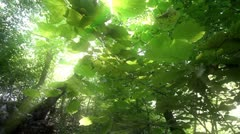 Natural forest Stock Footage