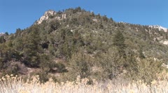 WorldClips-Desert Brush-zoom Stock Footage