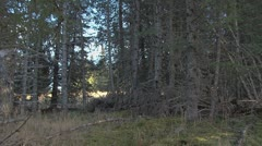 Man Carrying Log and Saw Through Forest 2 Stock Footage