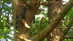 Kitten hanging out in tree Stock Footage