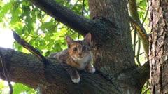 Kitten plans great tree escape; part 2 Stock Footage