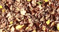 Dry leaves at park; autumn scene (pan shot) Footage