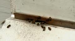 Bee hive closeup Stock Footage