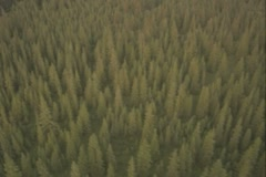 Helicopter view of forested mountain sides - stock footage
