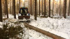 Woodcutters - stock footage