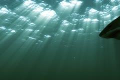 Great White Shark 09 720x480 Night Stock Footage