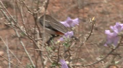 A bird cuts off a flower from the stem Stock Footage