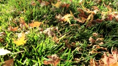 Yellow fall hanging leaves Stock Footage