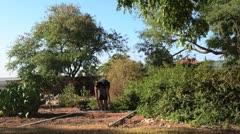 Building a Sukkah on Sukkot - stock footage