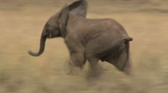 Baby elephant running Stock Footage