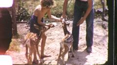 PETTING BABY ANIMAL Zoo Cute Little Girl Deer 1960s Vintage Film Home Movie 1127 Stock Footage