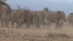 Elephants in a dusty dry park Stock Footage