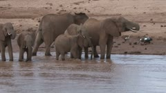 Elephants in a river 1 Stock Footage