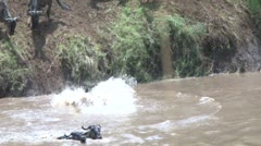 Gnus diving into the river Stock Footage