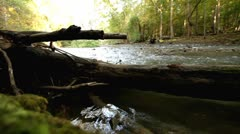 Dead tree in forest stream low view Stock Footage