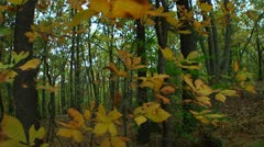 Fall foliage in the forest (LP-Voorhees-032) Stock Footage