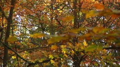 Colorful Fall Foliage (LP-Voorhees-037) Stock Footage