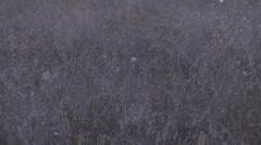 Beautiful dry grass - stock footage