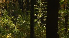 Inside the Forest on Fall (LP-Voorhees-043) Stock Footage