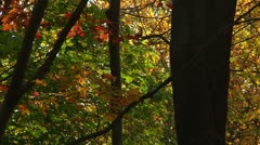 Colorful Fall Foliage (LP-Voorhees-044) - stock footage