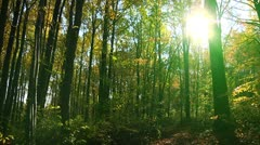 Sun view from the forest (LP-Voorhees-047) Stock Footage