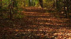 Beautiful Fall Scene in the Forest (LP-Voorhees-054) Stock Footage