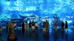 Oceanarium and underwater zoo inside of the Dubai Mall, United Arab Emirates Stock Footage