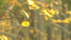 Forest tree leafs changing color during autumn - stock footage