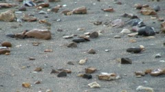 Pebbles on a Beach - stock footage