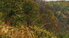Power Lines in the Fall (LP-Voorhees-083) - stock footage