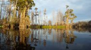 Stock Video Footage of Cypress Swamp River