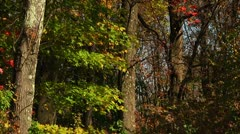 Colorful Fall trees (LP-Voorhees-096) - stock footage