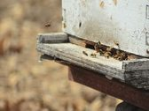 Bees fly in and out of their Beehive Stock Footage