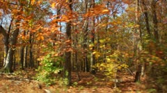 Vehicle shot of a forest during Fall (LP-Voorhees-122) Stock Footage