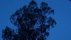 Time lapse of a tree at night fall - stock footage