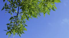 Branch of a tree Stock Footage