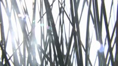 Grass blowing in the wind - close up HD Stock Footage