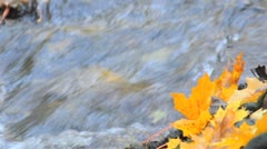 Maple leaf during autumn laying in a river Stock Footage
