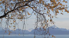Birch at the overlook - stock footage