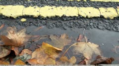 Autumn Leaves in Road Gutter - stock footage
