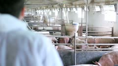 Veterinarian at a Pig Farm Stock Footage