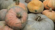 Pumpkin, Vegetables BIO Farm, Ecological Farmer, Organic Horticulture Stock Footage