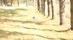 Dog fetching frisbee Stock Footage